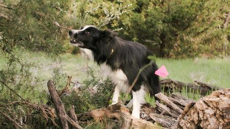 Watch Cadaver Dogs. Episode 3 of Season 1.