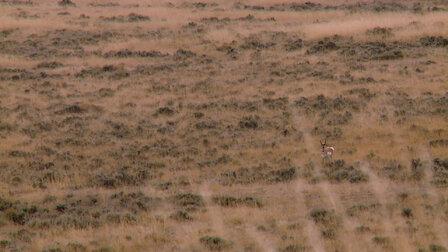 Watch Lobster of the Prairie: Wyoming Antelope. Episode 3 of Season 6.