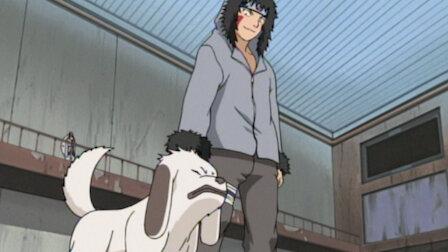 Watch Akamaru Unleashed! Who's Top Dog Now?. Episode 18 of Season 2.
