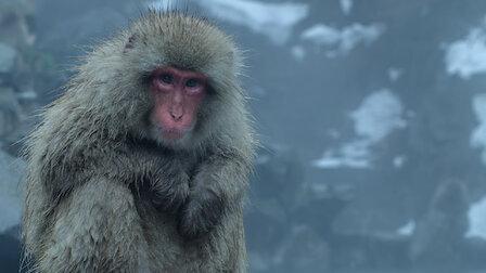 Watch Frozen Nights. Episode 2 of Season 1.