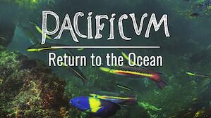 Pacificum: Return to the Ocean