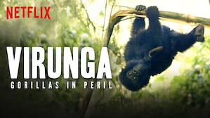 Virunga: Gorillas in Peril